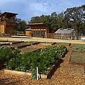 Biodynamic Garden by Blake Webster
