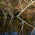 Birch Lake Reflections by LeeAnn McLaneGoetz McLaneGoetzStudioLLCcom