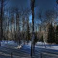 Birch Shadows by Kim French