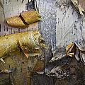 Birch Tree Bark No.0863 by Randall Nyhof
