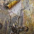Birch Tree Bark No.0889 by Randall Nyhof