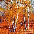 Birch Trees In Autumn by Dragica  Micki Fortuna