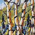 Birches Aglow By Prankearts by Richard T Pranke