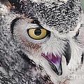 Bird 4 by Larry White