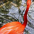 Bird Bath by Elizabeth Hart