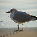 Bird by Carole Janello