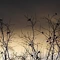 Bird Cove by Wanda Brandon