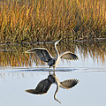 Bird Dance by Kay Lovingood