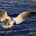 Bird Flying by Mats Silvan