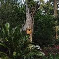 Bird House by Carol  Bradley