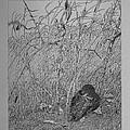 Bird In Winter by Daniel Reed