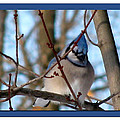 Bird Of Blue by Debra     Vatalaro