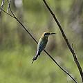 Bird Of Color by Douglas Barnard
