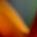 Bird Of Paradise Abstract by Roger Mullenhour
