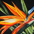 Bird Of Paradise by Dee Youmans-Miller