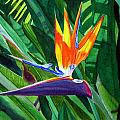 Bird-of-paradise by Mike Robles