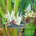 Bird Of Paradise by Photographs In Motion