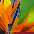 Bird Of Paradise by Prashant Shah