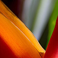 Bird Of Paradise by Roger Mullenhour
