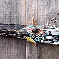 Bird Of Prey by Krista Ouellette