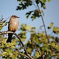 Bird On Branch by Chase Hall