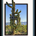 Bird On Cactus by Larry White