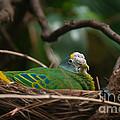 Bird On Nest by Carol Ailles