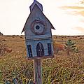 Bird Sanctuary by Pamela Patch