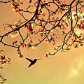 Bird Singing In The Morning Sky by Autumnn