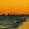 Bird Sunset I by James Granberry