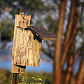 Birdhouse 23 by Andrew Pacheco