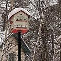 Birdhouse by Anna Ruzsan