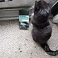 Birding Cat One by Joshua House