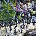 Birds At Cape St. Mary's Bird Sanctuary In Newfoundland by Elena Elisseeva