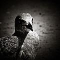 Bird's Eye View by Jessica Brawley