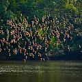 Birds In Flight by Chua  ChinLeng