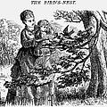 Birds Nest, 1873 by Granger