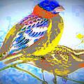 Birds Of Color by K Arthur