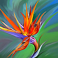 Birds Of Paradise 1 by James  Mingo
