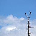 Birds Of Prey At Peace by LeeAnn McLaneGoetz McLaneGoetzStudioLLCcom