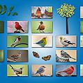 Birds Of The Neighborhood by Bonnie Barry