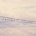 Birds On A Wire Pink And Blue by Paulette B Wright