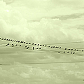 Birds On A Wire Tinted by Paulette B Wright