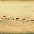 Birds On Wires Back In Time by Paulette B Wright