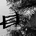 Birds Rest by Edgar Laureano