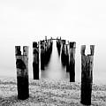 Birds Resting On A Derelict Pier by Scott Masterton