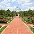 Birmingham Rose Garden by Carol Groenen