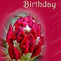 Birthday Card - Red Azalea Buds by Mother Nature