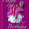 Birthday Greeting Card - Columbine Flower by Mother Nature