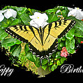 Birthday Greeting Card - Tiger Swallowtail Butterfly by Mother Nature